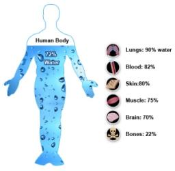 human-body-water1